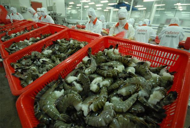 Xuất khẩu tôm sang thị trường Trung Quốc tăng mạnh