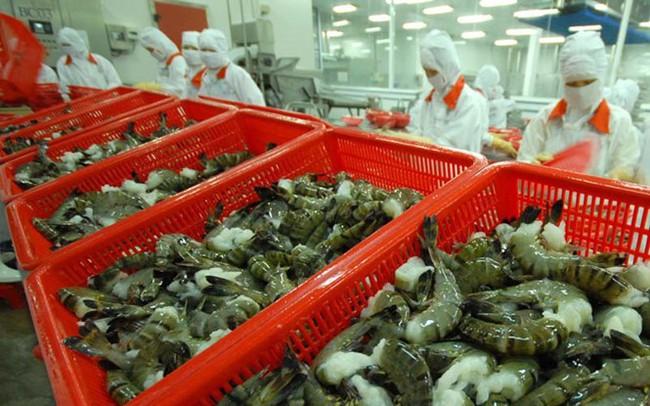 Xuất khẩu tôm sang EU được dự báo sẽ tăng trở lại vào cuối năm