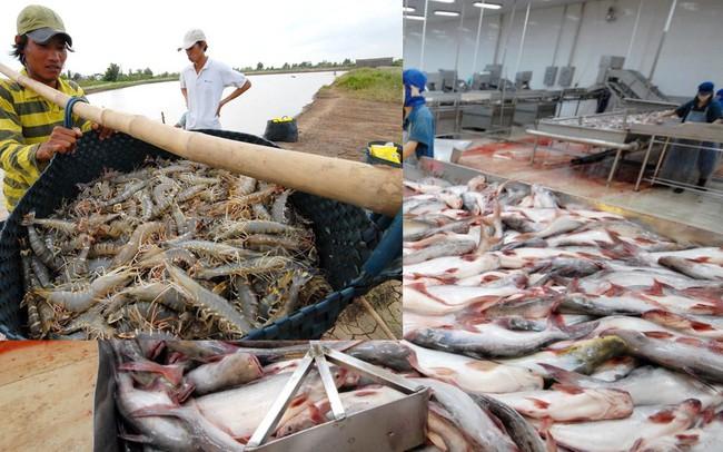 Bộ Nông nghiệp: Đẩy mạnh sản xuất cá tra, tôm vào cuối 2018 để nắm bắt cơ hội