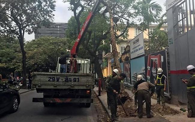 Cây bằng lăng ở phố Nhà Chung gãy đổ, xe Camry hư hỏng nặng