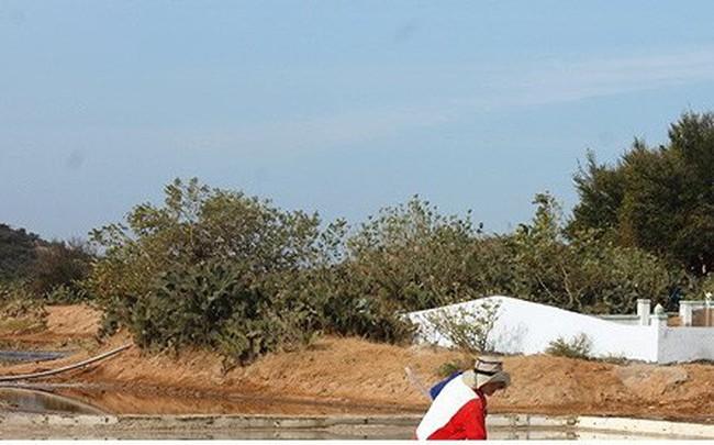 Diêm dân Ninh Thuận trúng vụ muối đầu năm