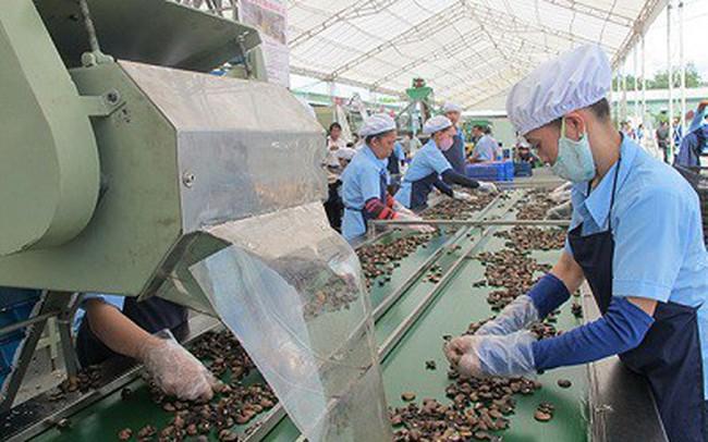 Khó tăng sản lượng, ngành điều chuyển hướng tăng chất lượng