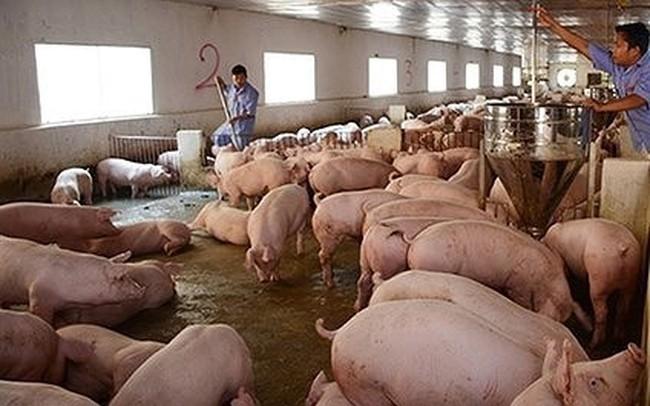Giá lợn hơi tăng vọt sẽ tác động đến CPI tháng 5