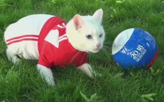 """""""Thánh tiên tri"""" của World Cup 2018 được chăm sóc bằng chế độ đặc biệt để chờ ngày bóng lăn"""