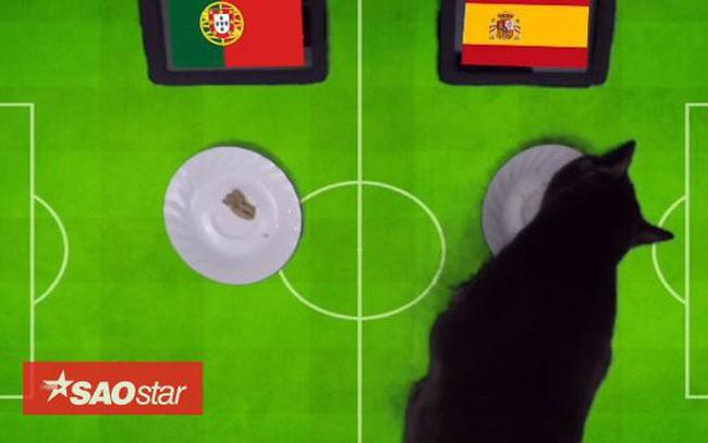 'Tiên tri' mèo đen dự đoán Bồ Đào Nha sẽ gục ngã trước Tây Ban Nha