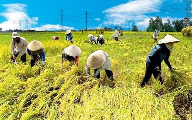Nông nghiệp Việt dưới góc nhìn của một nhà buôn: Cô gái quê danh giá chờ người đến tán tỉnh!