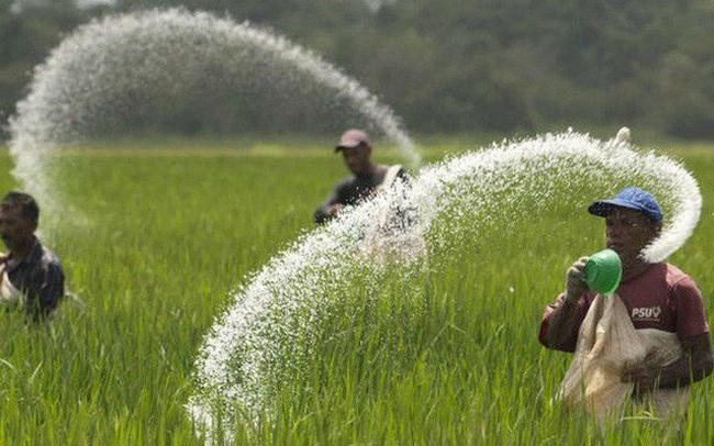 VDSC: Ngành phân bón 2020 tiếp tục chịu ảnh hưởng tiêu cực bởi triển vọng nông nghiệp thấp