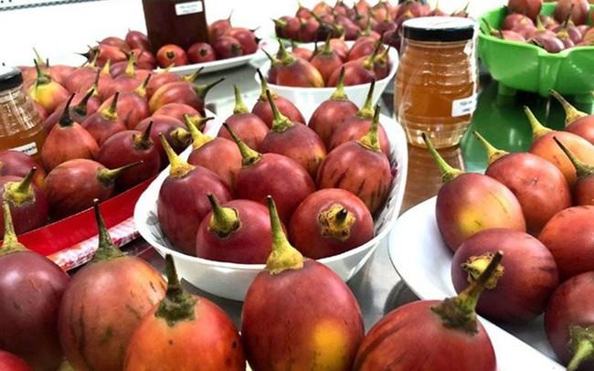 Lạ: Cà chua 300 nghìn đồng/kg, thơm mùi dứa, chua như chanh leo