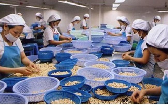 """Các doanh nghiệp ngành điều """"đói"""" vốn và không chủ động nguyên liệu"""