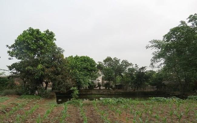 TP HCM hưởng lợi gì từ việc chuyển đổi 26.000 ha đất nông nghiệp?