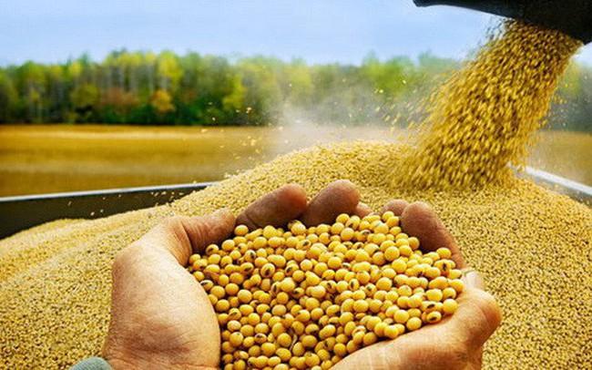 Chiến tranh thương mại đang thay đổi cục diện ngành đậu tương thế giới?