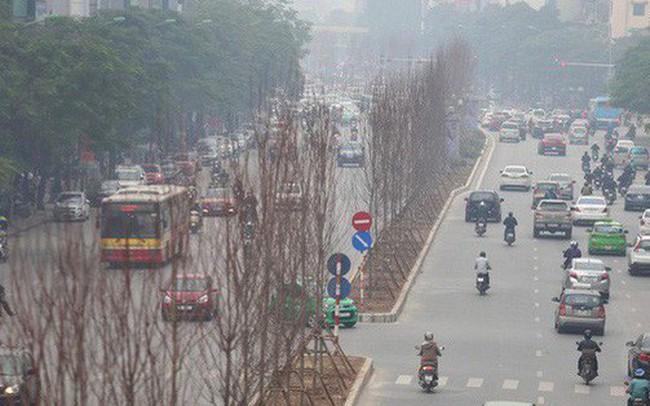 """GS nói trồng thử cây phong lá đỏ ở Hà Nội """"không có thiệt hại ngân sách nếu thất bại"""""""