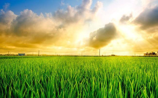 Những điểm nhấn ngành nông nghiệp năm 2018