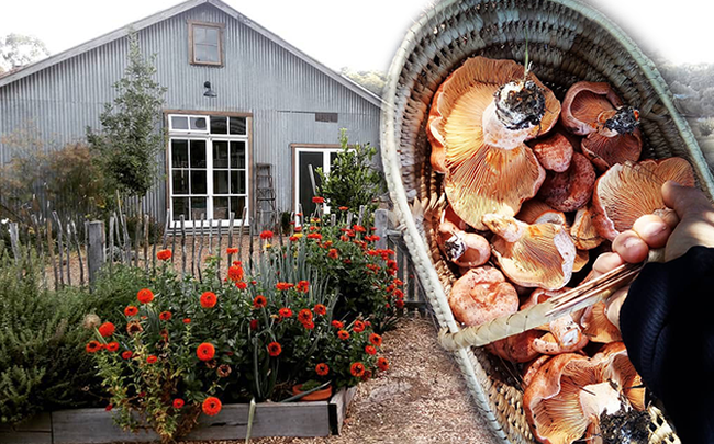 Gia đình 5 người quyết tâm không trở lại thành phố vì quá yêu thích cuộc sống nhà vườn ở nông thôn