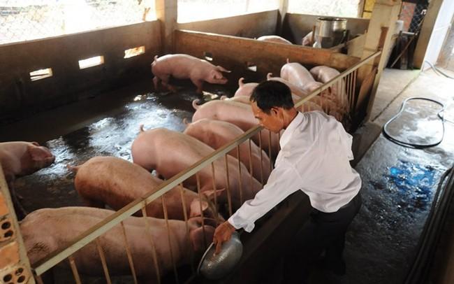 """Không để thương lái """"thổi"""" giá thịt lợn"""