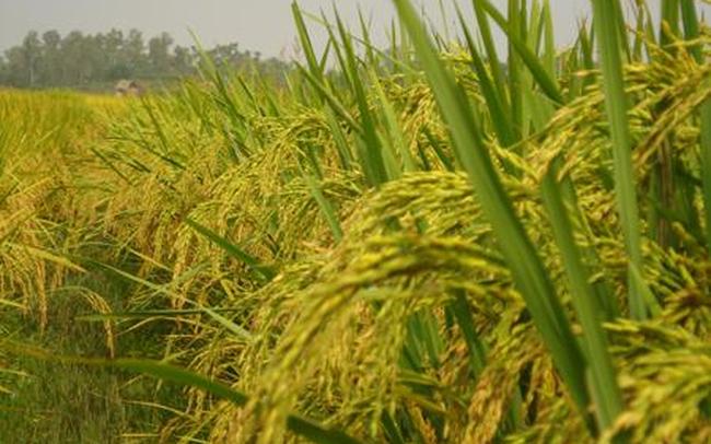 Giống cây trồng Miền Nam (SSC) điều chỉnh giảm 18% chỉ tiêu lợi nhuận cả năm