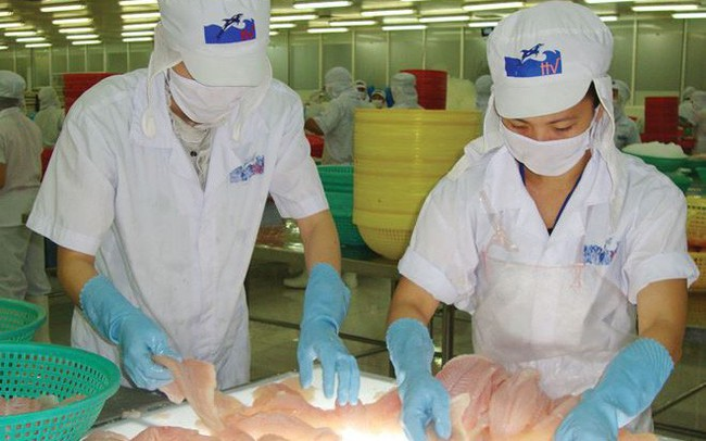 Cổ phiếu tăng 53% sau 2 tuần, Thủy sản Hùng Vương báo lỗ hợp nhất 242 tỷ đồng trong quý 4 niên độ tài chính