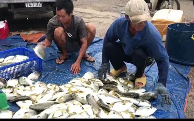 Thủ phủ nuôi thủy sản bán tháo tôm cá trước giờ bão số 5 đổ bộ