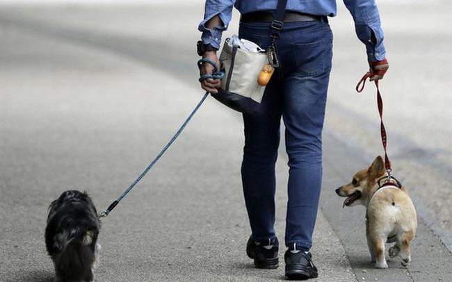 Tỷ phú Masayoshi Son gây mất niềm tin hoàn toàn: Rót 300 triệu USD vào startup dắt chó đi dạo 'trời ơi đất hỡi' và giờ công ty này trên bờ vực phá sản, định giá rẻ hơn cả số tiền Softbank đầu tư