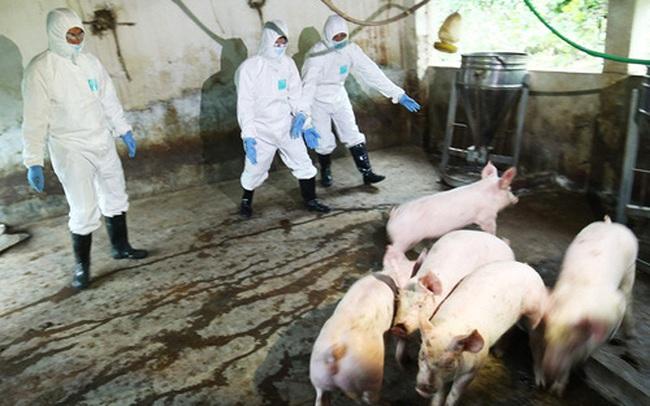Bộ trưởng Nông nghiệp Nguyễn Xuân Cường: Chi 2.370 tỷ đồng hỗ trợ nông dân bị thiệt hại bởi dịch bệnh tồi tệ nhất lịch sử
