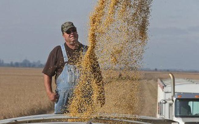 Reuters: Trung Quốc cam kết mua 50 tỷ USD nông sản để được Mỹ hoãn áp thuế