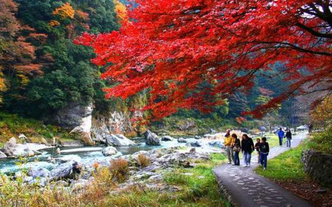 Xao xuyến với vẻ đẹp ngày thu Nhật Bản