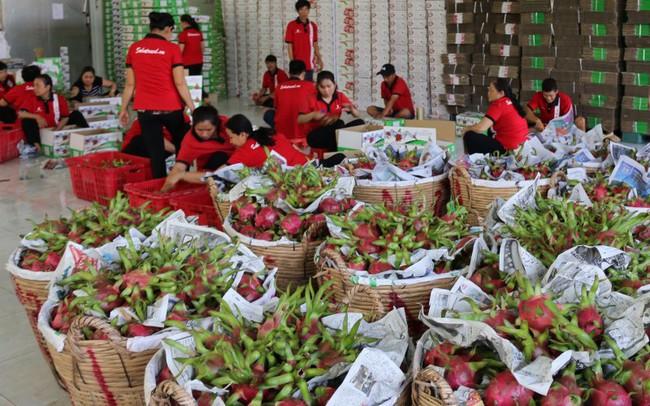 Từ 1/5, trái cây lót bằng rơm rạ sẽ không được xuất khẩu vào Trung Quốc