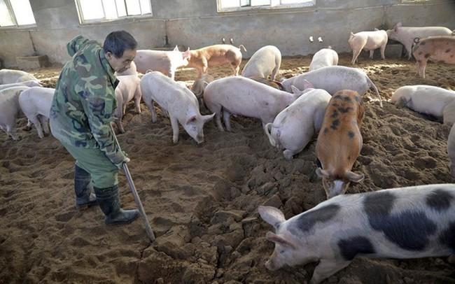 Dịch tả lợn hành hoành, Thanh Hóa đề nghị các ngân hàng điều chỉnh hạn trả nợ hỗ trợ người dân vượt khó khăn