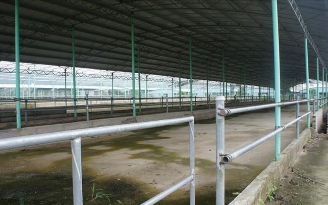 Dự án nuôi bò nghìn tỉ khiến ông Trần Duy Tùng vướng lao lý