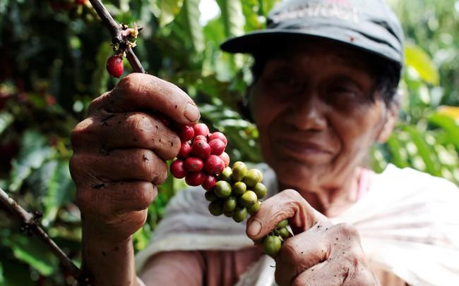 """Nikkei: Gần và rẻ, cà phê Việt Nam đang """"tấn công"""" mạnh mẽ thị trường Nhật Bản"""