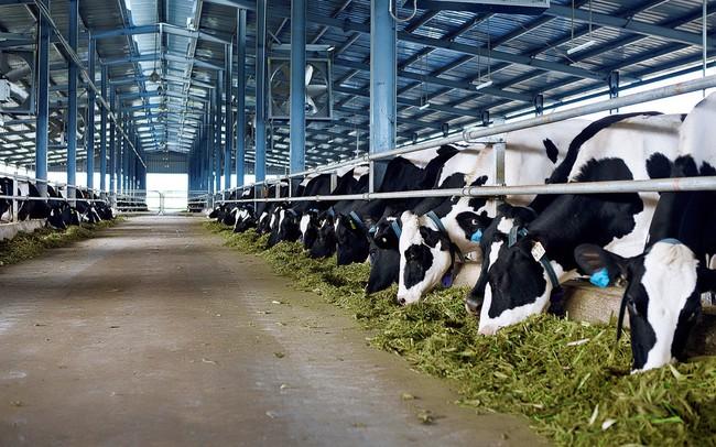 Đề xuất điều kiện sản xuất thức ăn chăn nuôi