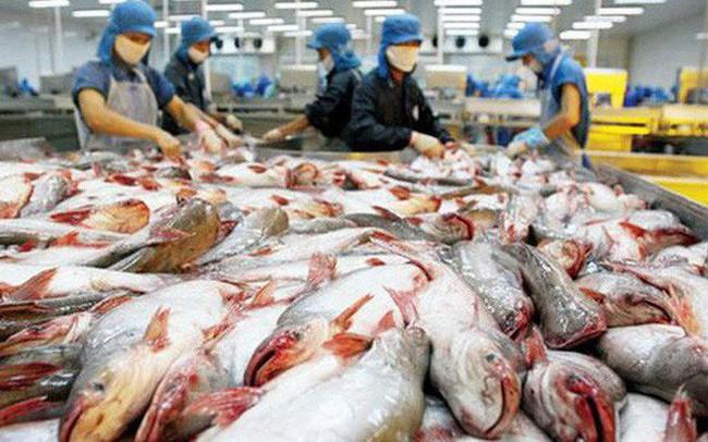 Xuất khẩu cá tra, basa sang thị trường Mỹ sẽ khó khăn