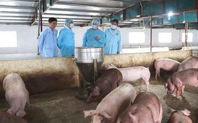 Xuất hiện ổ dịch tả lợn châu Phi đầu tiên trên địa bàn tỉnh Kon Tum