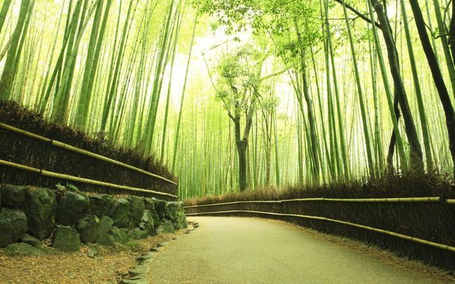 """""""Lạc lối"""" giữa mê cung xanh mướt của rừng tre Sagano: Nơi chứa đựng những âm thanh tinh túy cả Nhật Bản đều muốn bảo tồn"""