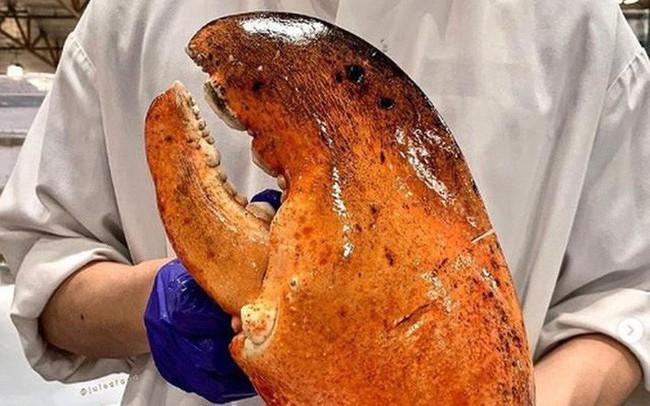 Bóc giá từng bộ phận của tôm hùm - chị em mê hải sản cần biết để tiêu dùng thật thông minh