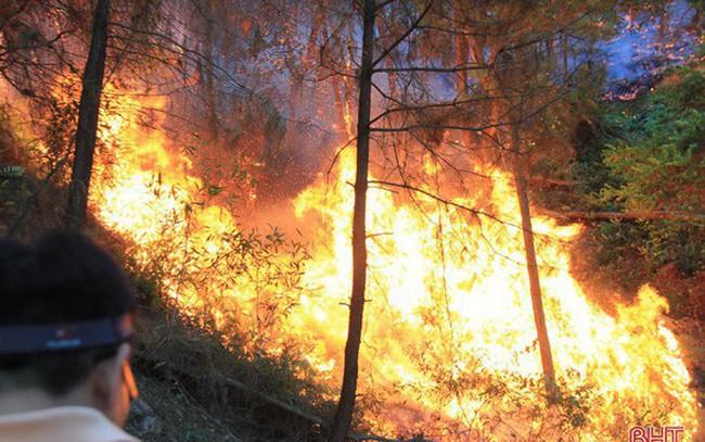 Những con số đau lòng về cháy rừng miền Trung tháng 7