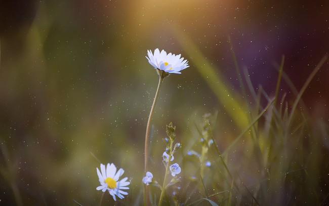 Bông hoa không kết thành quả ngọt mới là bông hoa đẹp nhất: Thành quả cũng chỉ là một phần, quan trọng ta có hạnh phúc hay không