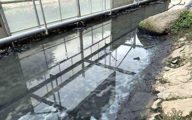 Dùng công nghệ Nhật: Sông Tô Lịch nước trong, nhìn rõ đáy bùn đang phân huỷ