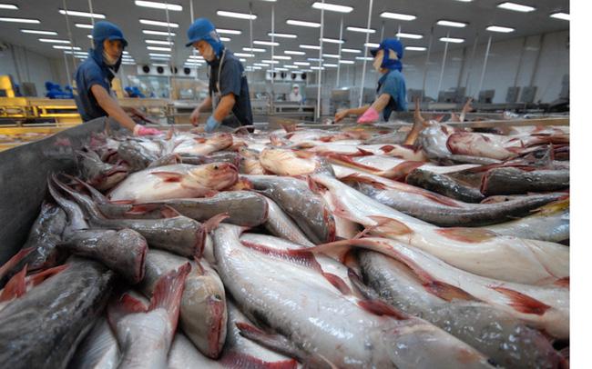 Thủy sản Hùng Vương (HVG) lỗ tiếp 129 tỷ đồng trong quý 3, nâng tổng lỗ từ đầu năm lên 257 tỷ đồng