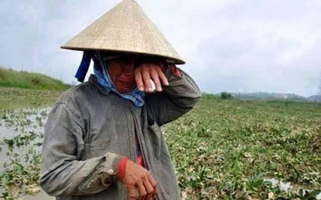 Reuters: Cầu nhập khẩu gạo từ Trung Quốc giảm, Việt Nam phải tìm người mua mới