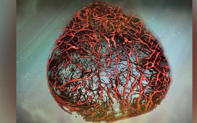 Lần đầu tiên nuôi thành công mạch máu người: Cuộc cách mạng lớn với hàng triệu người đã xuất hiện