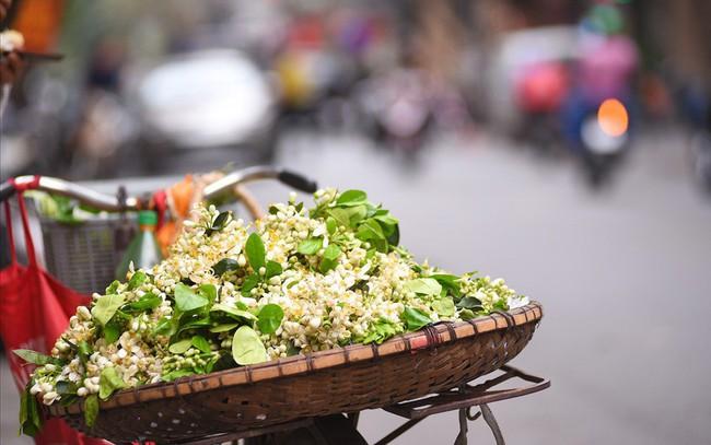 Đất Hà Thành thơm lừng mùa hoa bưởi
