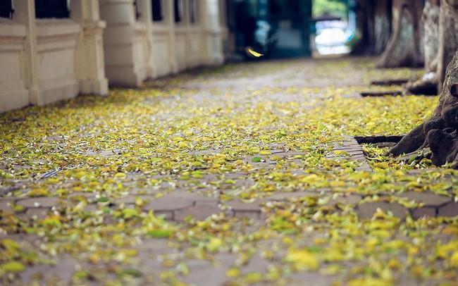 Phố phường Hà Nội đẹp nao lòng mùa lá rụng