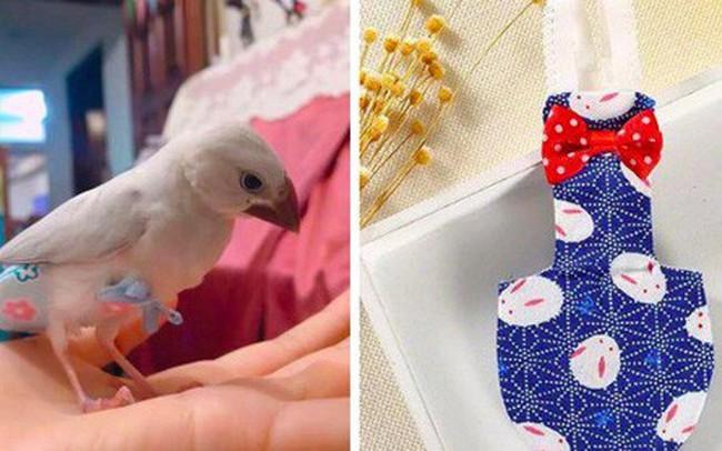 Cô gái 9x kiếm cả trăm triệu hàng tháng nhờ làm bỉm cho chim, xuất khẩu đi cả Mỹ, Canada, Ả Rập