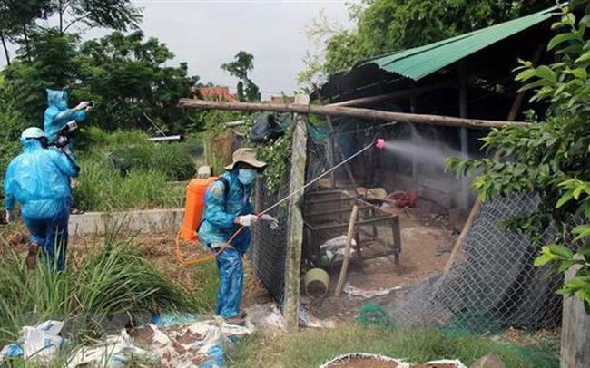 11 tỉnh, thành có ổ dịch cúm gia cầm, tiêu hủy trên 23.000 con