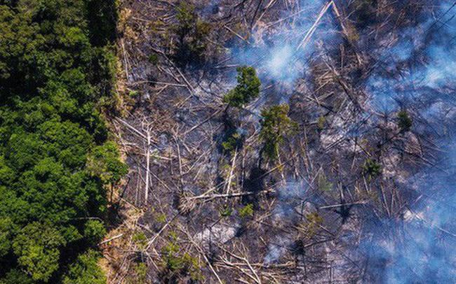 The New York Times: Phân tích ảnh vệ tinh đã chỉ ra chính xác thủ phạm gây cháy rừng thảm họa tại Amazon