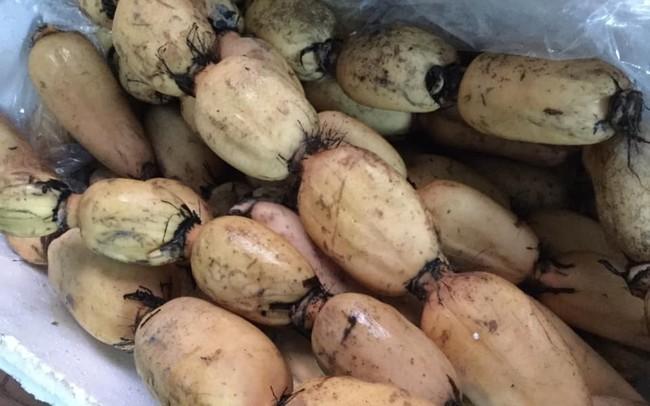 Loại củ Hàn Quốc quý như nhân sâm, Việt Nam lăn lóc bán đầy chợ