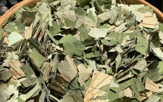 Loại lá mọc tràn ao bùn Việt Nam, 400 ngàn/kg, chị em ưa dùng để giữ eo
