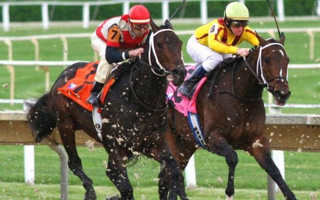 Vì sao Đà Nẵng muốn xây trường đua ngựa 200 triệu USD?
