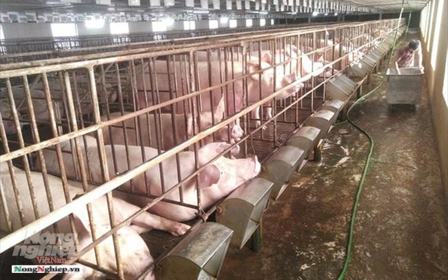 Hưng Yên: 100% xã, phường, thị trấn công bố hết dịch tả lợn Châu Phi